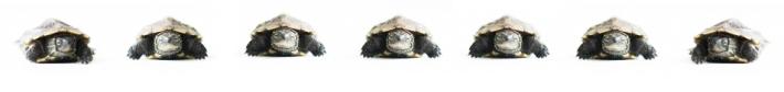 tortugas comunidad